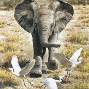carl brenders-flushing egrets baby elephant