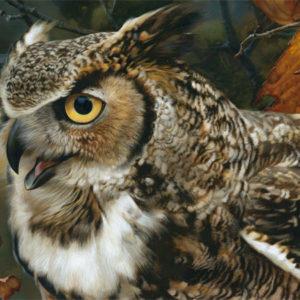 carl brenders-in focus great horned owl