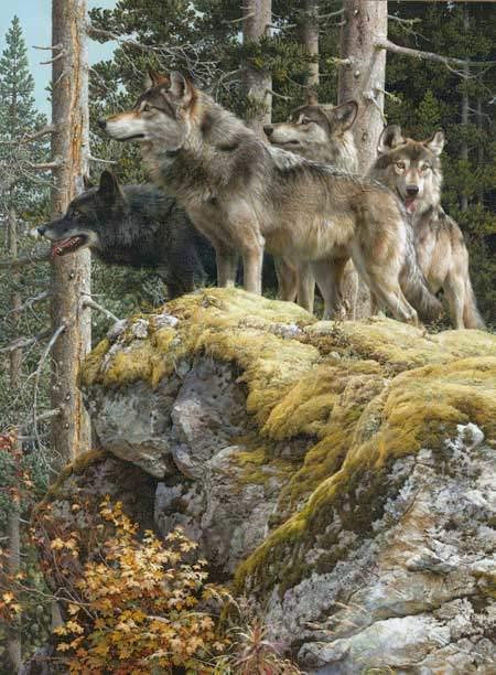 carl brenders-lookout tower wolves
