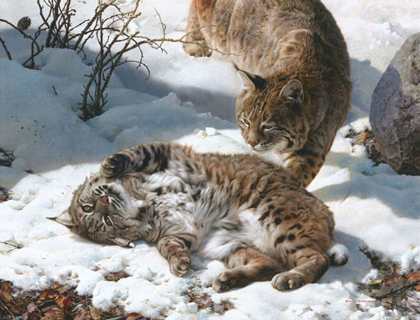 carl brenders-love is in the air bobcats