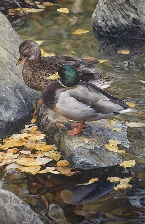 Carl brenders - mallard reflection