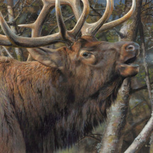 carl brenders-mating call bull elk