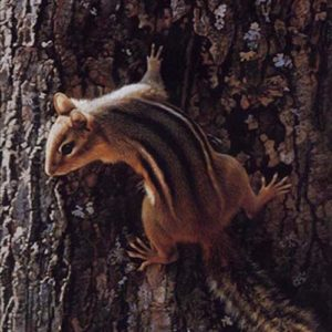 Carl Brenders-Narrow Escape Chipmunk