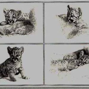 carl brenders-rocky camp cubs pencil