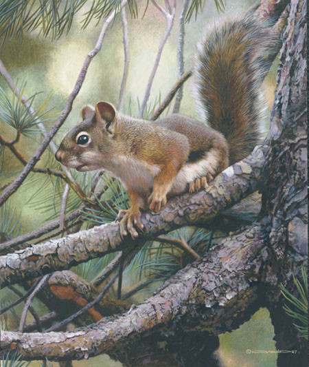 carl brenders-social climber red squirrel