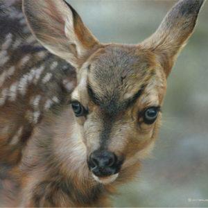 carl brenders-spotted mule deer