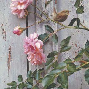 carl brenders-summer roses winter wren