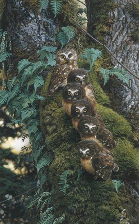 carl brenders-the family tree