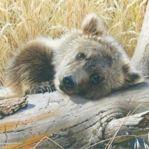carl brenders-time out grizzly cub