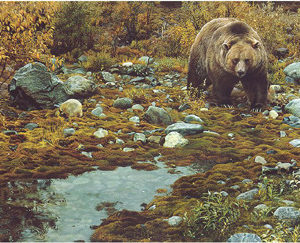 carl brenders-trail blazer grizzly bear