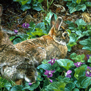 carl brenders-violet trails and cottontails