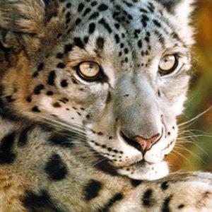 carl brenders-west of the moon snow leopard