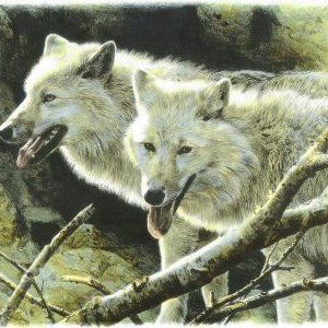 carl brenders-white wolves