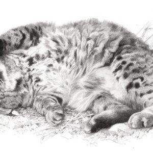 carl brenders-wild thing bobcat