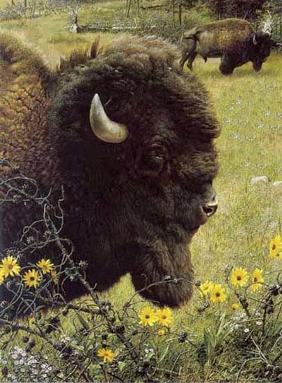 carl brenders-witness of a past bison