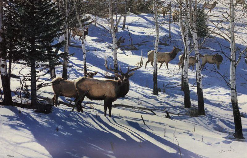 john banovich-mild winter elk