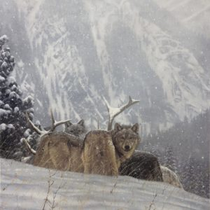 john banovich-winter kill
