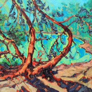 Dominik modlinski-pike bay pines