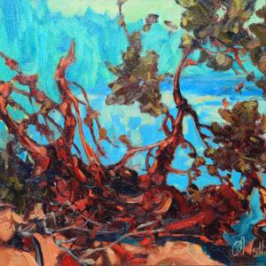 Dominik modlinski-pine labyrinth