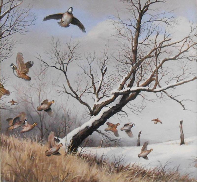 maynard reece-winter covey bobwhites