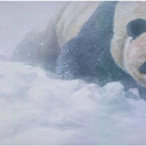 john seerey-lester-wolong whiteout panda