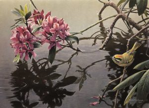 Robert Bateman-Golden Crowned Kinglet and Rhododendron