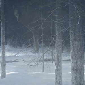 Robert Bateman-Midnight Black Wolf