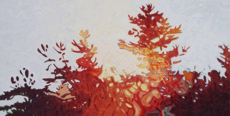 David Grieve - shifting pine 2