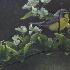 Robert-Bateman-Canada-Warbler-and-Plum-Blossoms