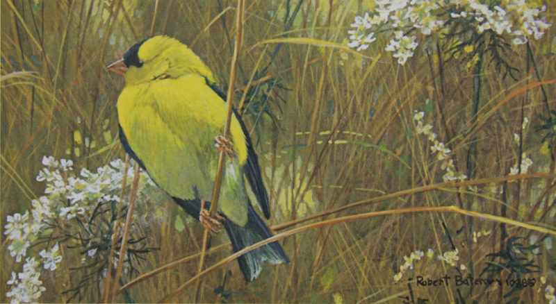 Robert-Bateman-Goldfinch-in-the-Meadow