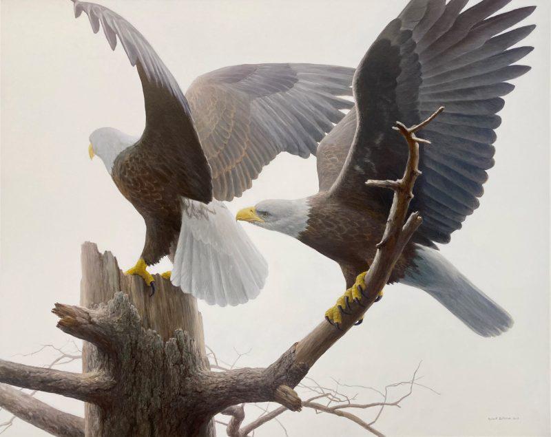 Landings - Bald Eagle