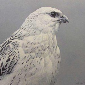 Robert Bateman - Arctic Portrait White Gyrfalcon