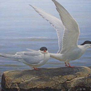 Robert Bateman - Arctic Tern Pair