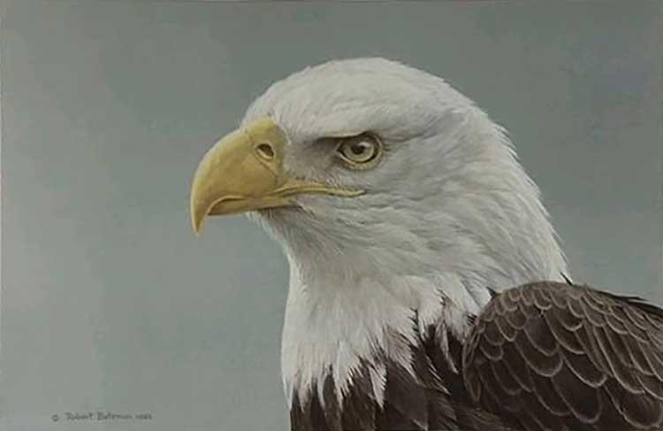 Robert Bateman - Bald Eagle Portrait