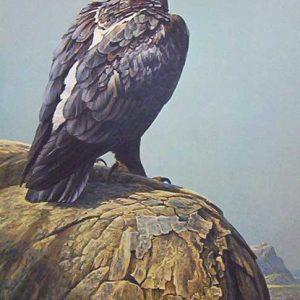 Robert Bateman - Black Eagle