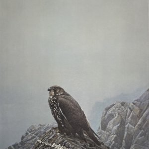 Robert Bateman - Dark Gyrfalcon